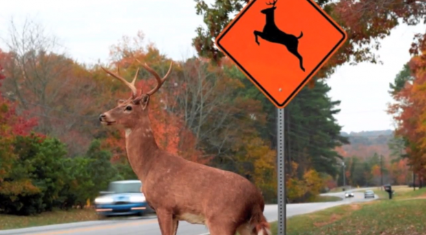 Tennessee Deer Car Accident