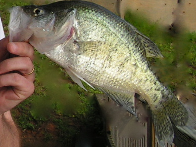 Cool weather warm fishing lake darbonne life for Lake d arbonne fishing report