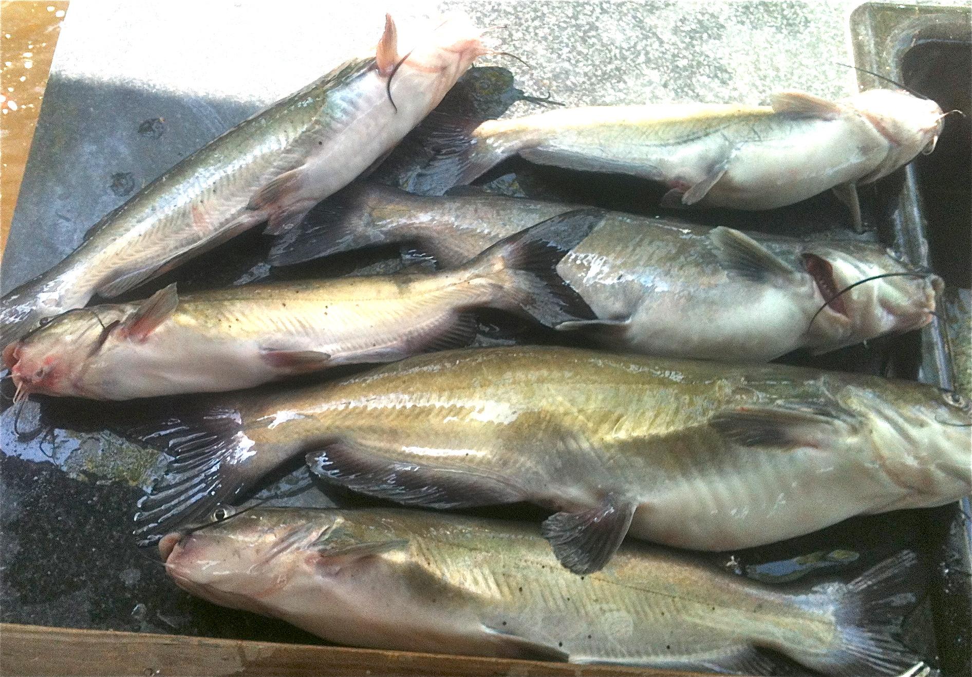 summer fishing report lake darbonne life On lake d arbonne fishing report