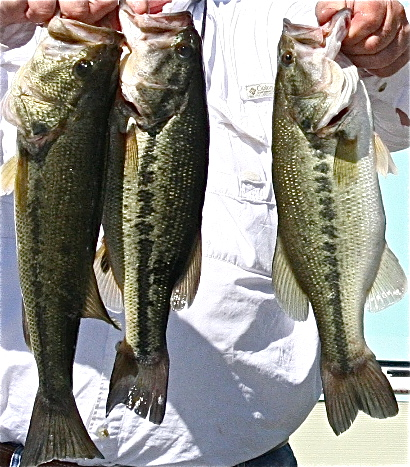 Fishing the fourth lake darbonne life for Lake d arbonne fishing report