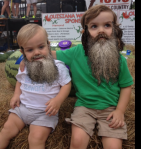 bearded haddoxes