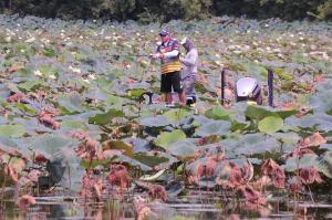 Tharp fished in the middle of huge lilly pad fields to claim his top prize