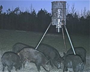 wild_hogs_2