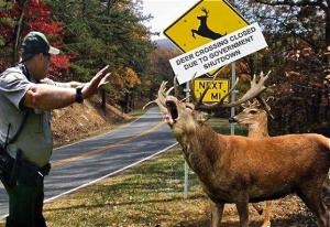 deerback