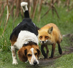 A good hunting dog can help you on your hunt. Wildlife is sneaky, sneaky, sneaky, you know...