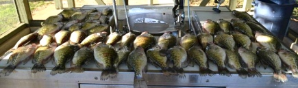 These 40 crappie were among the ones caught this weekend that went to the crappie.com fish fry!